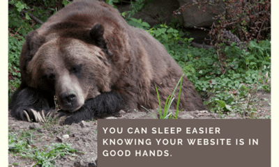 In the mood to hibernate, but worried about keeping your website running? WordPress Guy has got your back! Schedule your consult today....