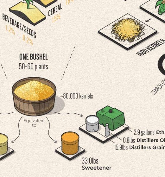 uses of corn